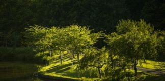 ecologiaembalsamar